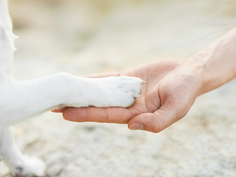 dog with paw high five and hand of owner