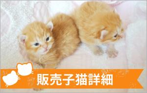 販売猫の詳細
