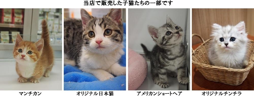 湘南子猫物語で販売した猫たち