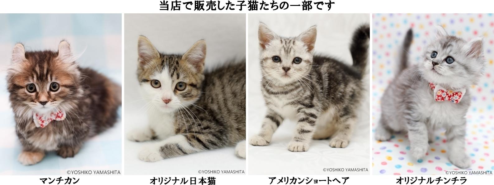 販売した子猫